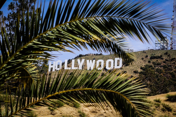 hollywood sign palm trees