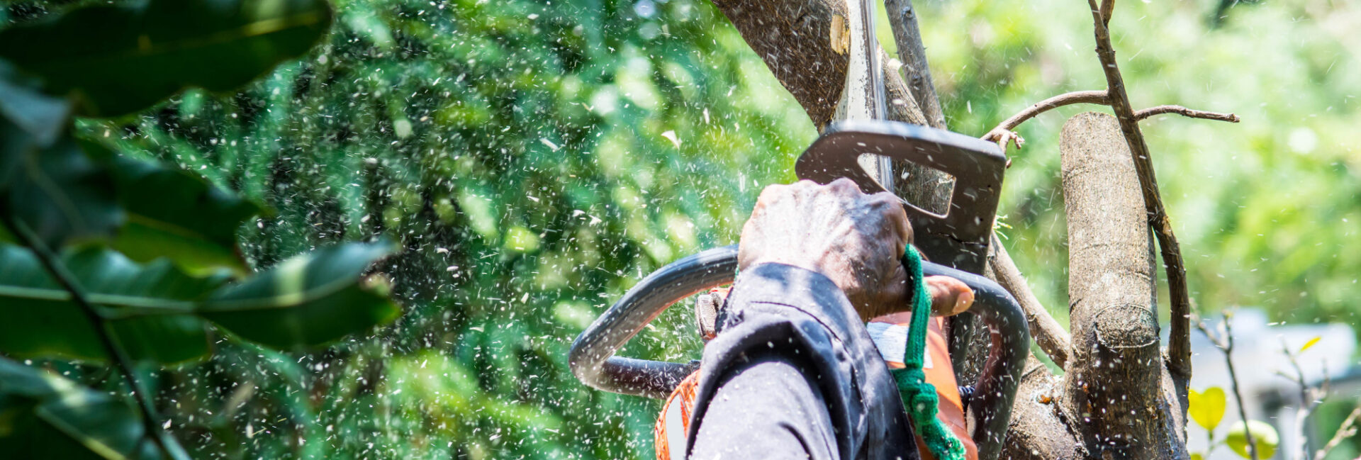 Knowing how to trim a tree properly is vital for preventing diseases from spreading around to all your plants. Keep reading to learn how the process is done.