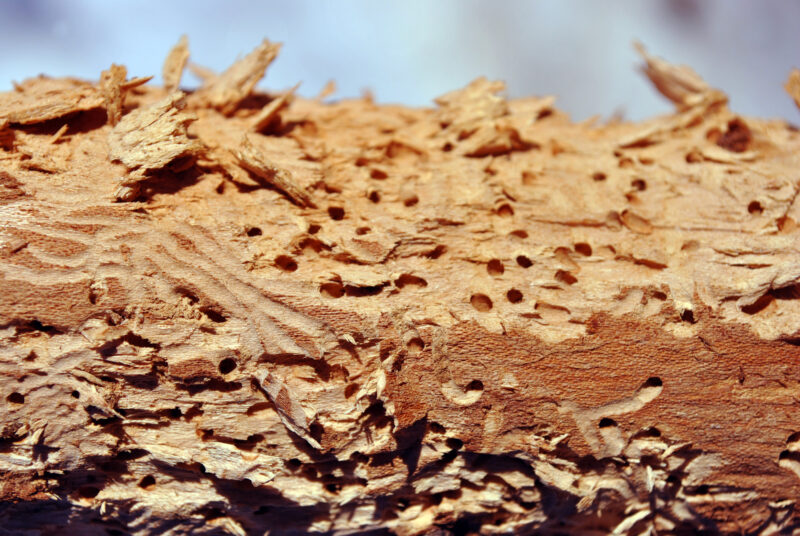 You don't have sit back and let termites eat your home. Get proactive about your termite problems by hiring a termite service.