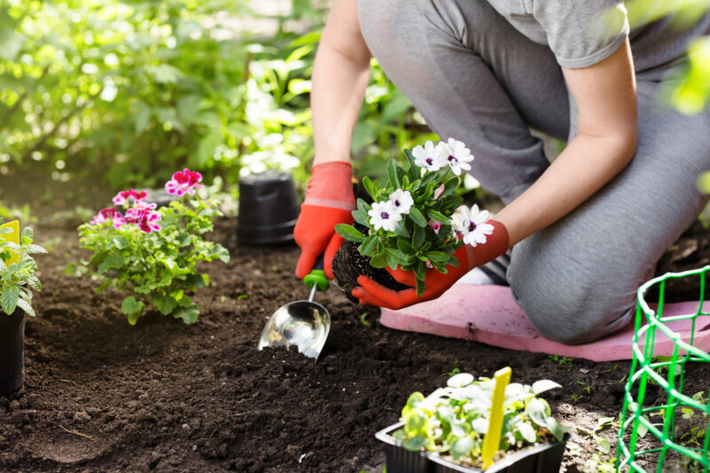 Are you wondering about the best garden type for your home? Read this guide to discover different types of gardens and which style most suits your home!